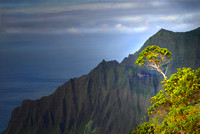 Tree growing on a mountain on the Napali coast